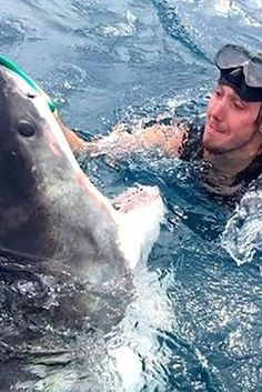 """An image of a diver pushing the nose of a great white shark went viral in Australia over the weekend after a man posted it on the Perth & WA Fishing Reports Facebook page on Friday with a dubious description: """"My bro sent me this photo taken of a local diver near Augusta pushing away this great white with his glove on the nose."""