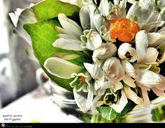 O primavara frumoasa! How Beautiful, Romania, Spring Time, Succulents, Landscape, Plants, Scenery, Succulent Plants, Plant