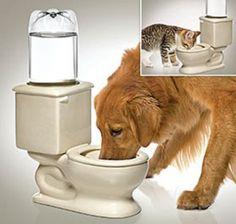 TOILET DRINKING BOWL DOG OR CAT - CERAMIC