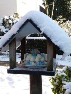 Bird house  with Bird Cake