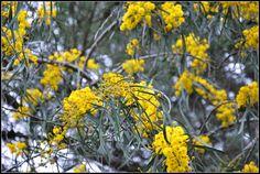 Fiori gialli - Policoro