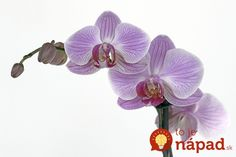 Free Image on Pixabay - Orchid, Flower, Blossom, Bloom, Bud Love Massage, Massage Envy, Free Pictures, Free Images, Pearl City Hawaii, Flower Images, Blossom Flower, Orchids, Christmas Ornaments