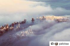 Zivot v oblakoch  #praveslovenske od @palickaa  #slovensko #slovakia #kojsovskahola #mountains #clouds #inversion #trees #forest #hill #landscape #nature #snow #winter