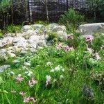 Jill Blackwood Garden Design- Wildlife Gardening and the 'Bonnie Burn' show garden