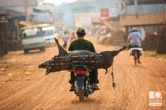 Express delivery (Kompong Khleang, Cambodia)