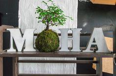 Cómo hacer kokedamas y cuidados esenciales | Cuidar de tus plantas es facilisimo.com