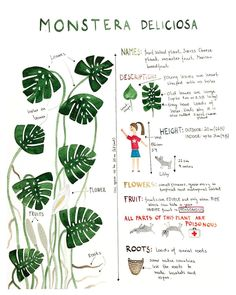 Indoor Vertical Gardening Tips and Ideas Organic gardening isn't always about food to eat. Some people enjoy growing flowers and other forms of plant life as well. You can grow anything bereft of harmful chemicals as long as you're d House Plants Decor, Plant Decor, Garden Plants, Indoor Plants, Monstera Deliciosa, Cool Plants, Flora, Trees To Plant, Potted Trees