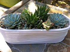 simplicity in the succulents...