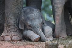 baby elephant #little #imianco