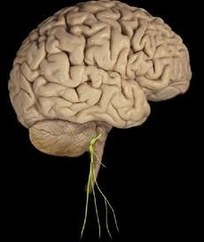 The Neurobiology of Grace Under Pressure | Psychology Today