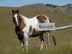 We are all connected...Namaste http://www.horsehippie.com