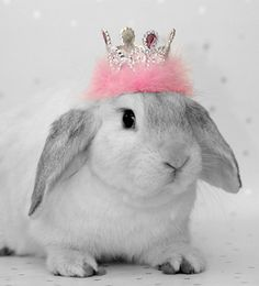 Coelhinha princesa!