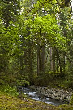 Forest Stream | Flickr - Photo Sharing!