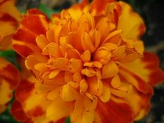 Yellow & Orange Flower