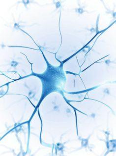 Die Nervenzelle als Workstation