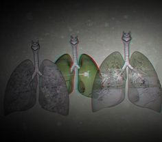 is proud to present the interactive art installation: A Chorus of Lungs, taking place from November to January Interactive Art, Art Installation, Lungs, Asian Art, Centre, November, 3d, Image, Collection