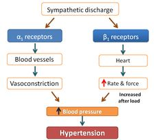 Beta receptors play pathological role in many of cardiovascular disorders. Learn here how beta blockers act in these situations. Cardiac Nursing, Pharmacology Nursing, Natural Blood Pressure, Blood Pressure Diet, Alpha And Beta Receptors, Alpha Blocker, Adrenergic Receptors, Biology Major, Beta Blockers