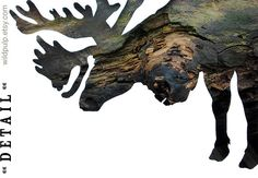 Caribou Silhouette In Bark, Wall Art Decor : Woodland Animal Photography - Rustic Lodge & Home, Natural Boys Room, Nursery