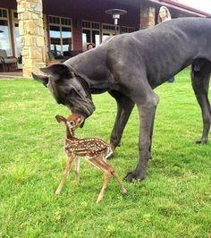 friends #animals