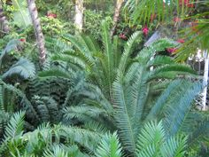The unique ways you can assimulate into your garden to give a tropical and relaxfull center.