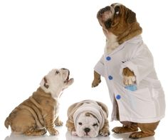 Nominate your favorite veterinary professional for a 2014 Petplan Vet Award and you could win a $100 PetSmart gift card! Hurry - ends November 15th!