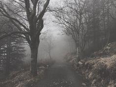 """Mi piace"": 388, commenti: 11 - Linn Setane (@linnsetane) su Instagram: ""Tåke."""