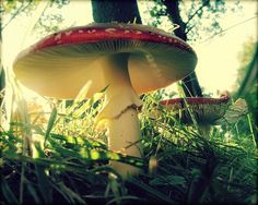 Mushroom by soleá on Flickr.