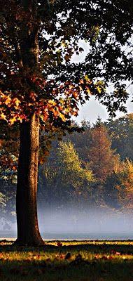 ﺃﺟﻤﻞ خلفيات و صور شاشة هواتف فيفو Vivo خلفيات الشاشة لهواتف فيفو Wallpapers Vivo خلفيات و صور للهاتف فيفو Vivo تنزيل خلفيات Wallpaper Country Roads Tree