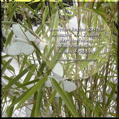 Spruch für einen Neuanfang - Frühlingsgedanken #Poems #Fruehlingsanfang #spring #springtime #Fruehling #Hoffnumg #Motivation #Schmetterling #butterfly #Zen #Bambus #bamboo #Winter #sprueche