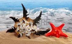 Resultado de imagen para conchas de mar
