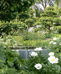 Tom Stuart-Smith has created a lovely contemporary planting scheme of greens and whites with peonies, astrantia and rodgersia (Chelsea 2008).