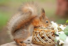 Squirrel - What's in there?