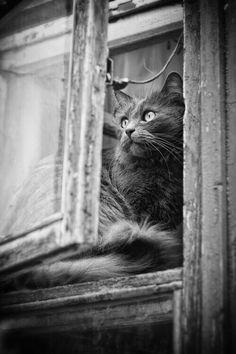 dreamy cat :))