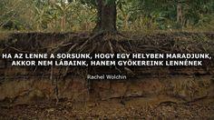 Rachel Wolchin, Movies, Movie Posters, Films, Film Poster, Cinema, Movie, Film, Movie Quotes