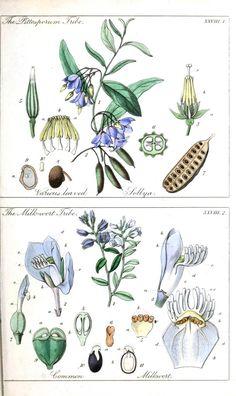 Ladies botany 3