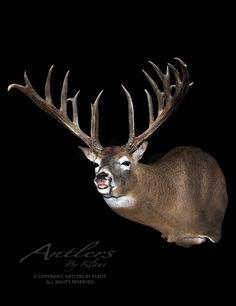 The Maurice Berekowski Buck