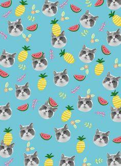Gato piña sandía