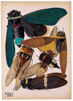 The artist, designer and etymologist E.A. Séguy was very prolific in the early part of the last century in France. This is part of a larger set of about 14 groups of insects.