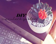 DIY Mini Succulent Garden! On the blog today! Succulents Garden, My Beauty, Tea Cups, Mini, Blog, Teacup, Blogging, Tea Cup