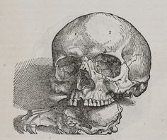 Plate from De humani corporis fabrica libri septem, 1543 by Andreas Vesalius. Andreas Vesalius, Medical Drawings, Halloween Miniatures, Deal With The Devil, Neo Traditional Tattoo, Vanitas, Skull Tattoos, Antique Maps, Skull And Bones