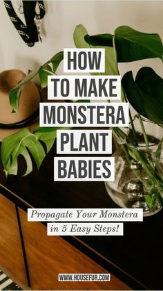 281 Best Plant Hacks For Beginners Images In 2020 Plants Plant