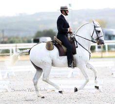 Lusitano working equitation <3 copyright Susanne Wiederkehr