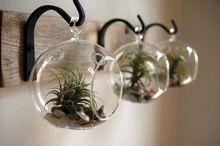 Conjunto de 3 estilo hanging Planter vaso de planta de ar kits, Vidro globo terrários suculentas, Jardim Bonsai / Home decoração / presentes(China (Mainland))