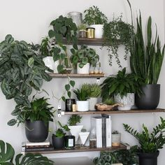 """9,383 Likes, 112 Comments - Darryl Cheng ~ (@houseplantjournal) on Instagram: """"#tbt a few weeks ago when I visited @melissamlo and her amazing plant shelf, built by her husband.…"""""""