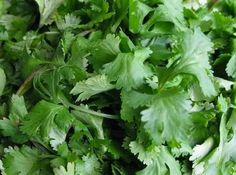Cilantro is a remarkable heavy-metal detoxifier and is able to remove mercury and aluminum from where it is stored in the adipose (fat) tissues. Cilantro is also able to mobilize mercury rapidly from the brain and central nervous system by separating it from the fat tissue and moving into the blood & lymph where when combined with a blue green.