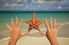 water, beach resort, sunkiss starfish, sea, beauti