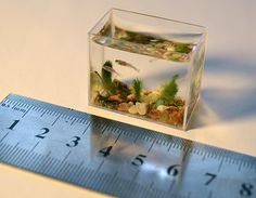Smallest aquarium in the world with real fishes / Each size its environment