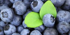 Foods to the Smart brain Choose Blueberry