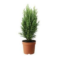 Plants, plant pots & stands - Dried flowers & potpourri - IKEA