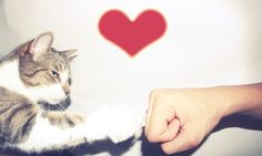if u like cats i guess Crazy Cat Lady, Crazy Cats, Fist Pump, I Love Cats, Geek Stuff, Animals, Reading, Dogs, People